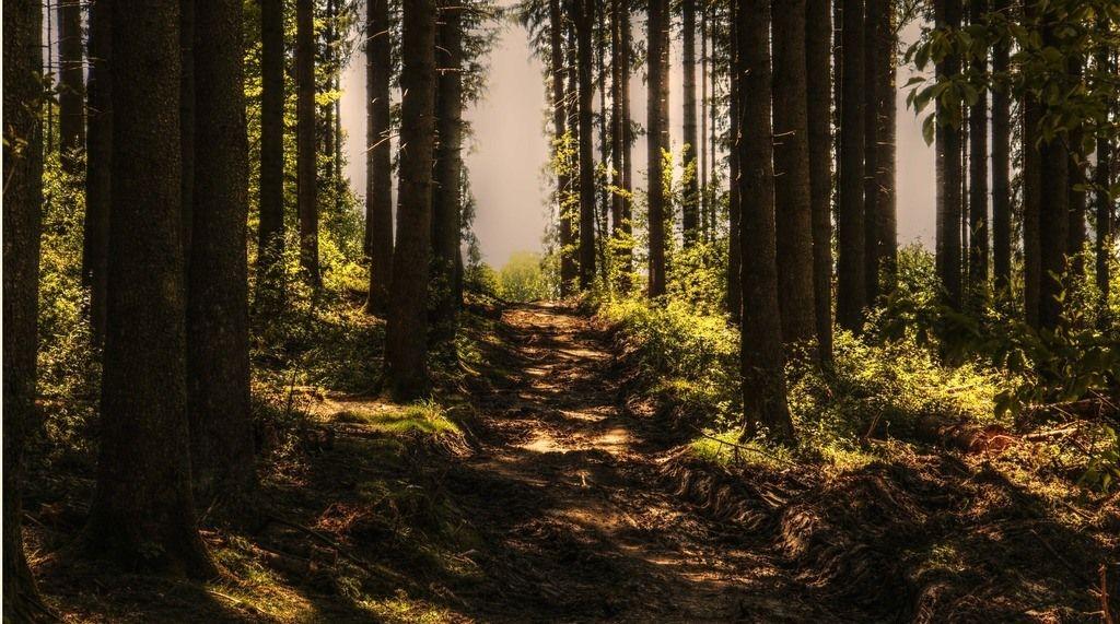 Tus hábitos crecen hasta crear un bosque