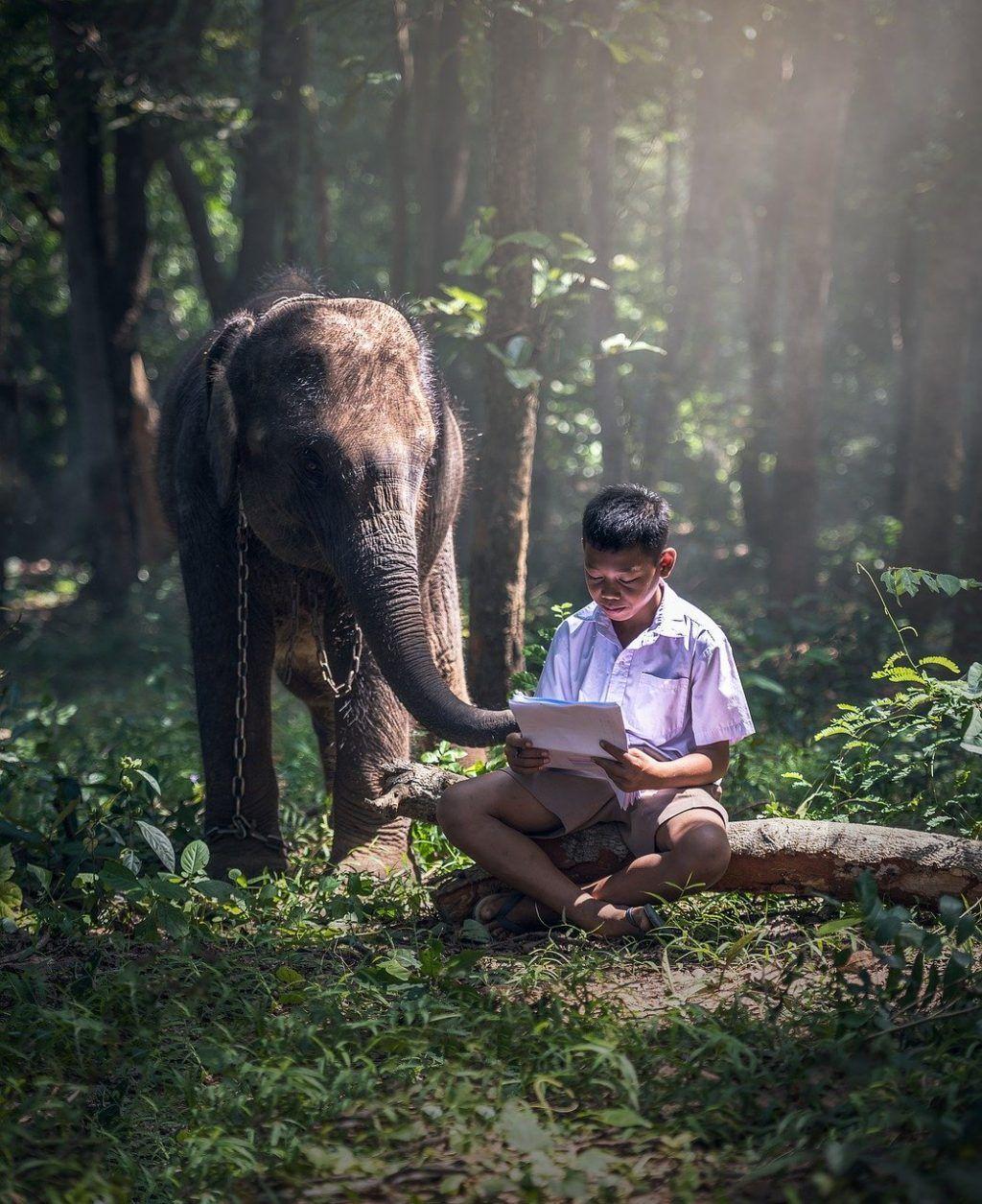 Creencias limitantes - Elefante encadenado y niño