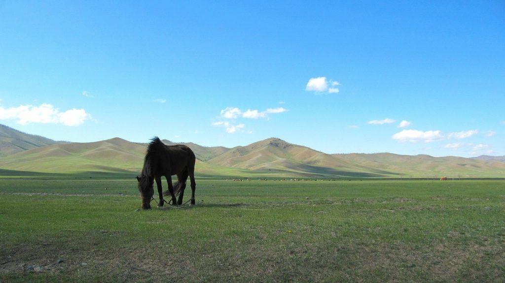 Cuento chino del viejo y el caballo