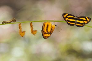 El poder de transformación del Mindfulness