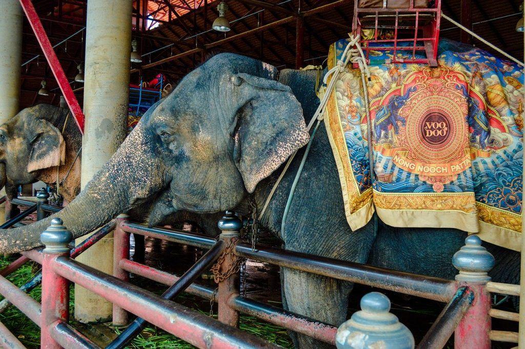 Creencias limitantes - Elefante encadenado
